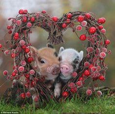 ¡Estos Cerditos Son Encantadores! | Momentos dulces - Todo-Mail