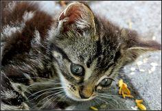 cats | Flickr - Photo Sharing!