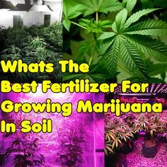 Whats The Best Fertilizer For Growing Marijuana In Soil
