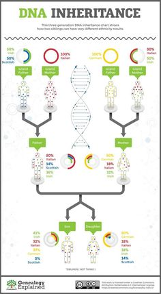 "Genea-Musings: Genealogy Explained: ""Do Siblings Have the Same DNA?"" Graphic Genea-Musings: Genealogy Explained: Do Siblings Have the Same DNA? Genealogy Websites, Genealogy Chart, Ancestry Dna, Genealogy Research, Family Genealogy, Genealogy Forms, Genealogy Humor, Dna Research, Pseudo Science"