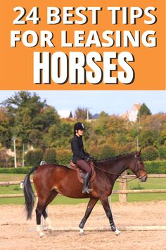 Do you want to avoid problems with your horse lease. These are 24 tips you will wish you had read before starting your horse lease. They can still help you however, if you are already leasing a horse. These are just tips to make the leasing experience the best it can possibly be. #equestrian #horsebackriding #horseleasing #horseridingtips Horse Training, Training Tips, Horse Behavior, Buy A Horse, Horse Riding Tips, Riding Lessons, Horse World, Confidence Building, Horseback Riding
