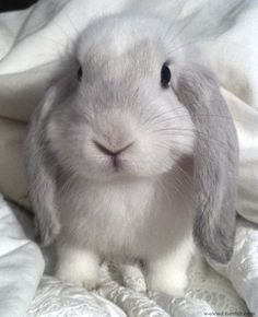 This baby bunny is adorable, but bunnies make good pets only for those ready to…