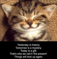 Cute Cat Pictures with Sayings | cute-kitten-smiling-inspirational-cat-saying-motivational-kitty-photo ...