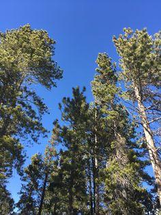 Bluebird skies in Colorado
