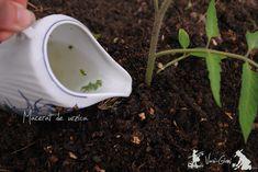 Plantarea rasadurilor de rosii - sfaturi - magazinul de acasă Growing Tomatoes In Containers, Tomato Plants, Tableware, Gardening, Tudor, Solar, Tips, Recipes, Beauty