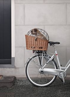 BEG Basil Dog Basket and Frame, vintage Dutch bicycles from BEG