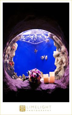 FLORIDA AQUARIUM, www.stepintothelimelight.com, wedding, wedding photography, details, wedding day, aquarium wedding, portrait, lace, wedding dress, Tampa, Florida, Florida wedding