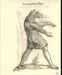 Mythology- Monster- Black and White - Monstorum Historia Memento Mori, Medieval Art, Medieval Manuscript, Illuminated Manuscript, Art Graphique, Illustrations, Mythical Creatures, Strange Creatures, Weird