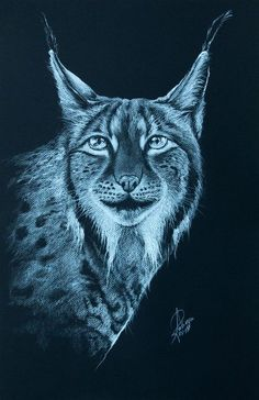 Buy Lynx, Pencil drawing by Andrzej Rabiega on Artfinder. Discover thousands of other original paintings, prints, sculptures and photography from independent artists.