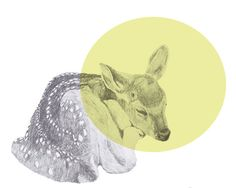 sleeping deer print 8x10 by mkendall on Etsy