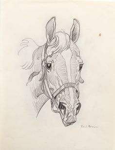 """Paul Desmond Brown for auction. Horse Portrait signed """"Paul Brown"""" lower right pencil drawing, 10 by 8 in. Horse Drawings, Animal Drawings, Art Drawings, Drawing Art, Horse Portrait, Pencil Portrait, Horse Cartoon, Paul Brown, Horse Sketch"""