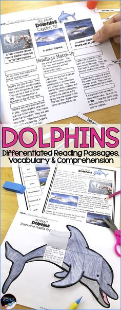 Dolphins Differentiated Reading Passages! Perfect for guided reading groups, your ocean animals unit, nonfiction reading, nonfiction text features, finding text evidence, and more! Includes graphic organizers and a dolphins crossword! Ocean Theme | Ocean Animals Teaching Ideas | Ocean Animals Activities | Ocean Animals Worksheets | Dolphins Reading Passages