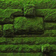 Moss - by zvegi