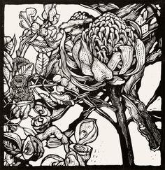 Andrew Crooks ~ Waratah Flower with Eucalyptus and Hakea Pods ~ Linocut, Arches Aquarelle off-white 185 gsm paper, 30 x 30 cm Lino Art, Woodcut Art, Botanical Art, Botanical Illustration, Linocut Artists, Linoprint, Scratchboard, Australian Artists, Australian Animals