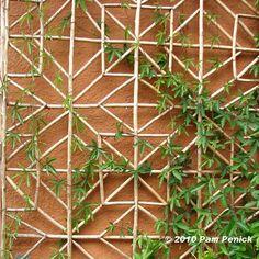 Bamboo_trellis.JPG (509×509)