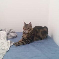 #buonpomeriggio dal #gatto #cat #goodevening #mummi #piccolo #letto #bed #love #amore #sleep #riposo