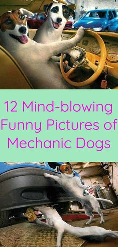 12 Mind-blowing Funny Pictures of Mechanic Dogs Funny Animal Pictures, Funny Photos, Funny Animals, Funny Dogs, Funny Memes, Mechanic Humor, Life Memes, Mind Blown, Most Beautiful Pictures