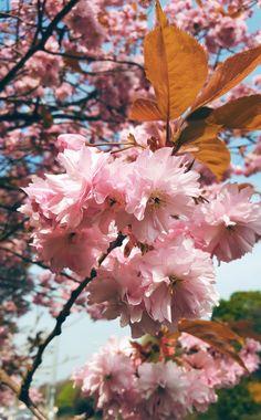 Pink Blossom : The Wednesday Blog Hop...