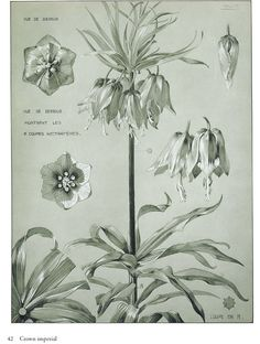 Artistic Plants and Flowers Ѿ CROWN IMPERIAL Ѿ Welcome to Dover Publications