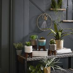 Shop Matalan's collection of artifical plants and flowers, perfect for bringing abit of life into your home! Ceramic Planters, Planter Pots, Artificial Plants, Planting Flowers, Indoor Outdoor, Boho, Winter, House, Accessories