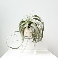 It-Plants Plantes Vertes Originales Airplant // Hëllø Blogzine blog deco & lifestyle www.hello-hello.fr #airplant #tillandsias