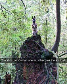 #humor #squirrel #fun #memes #girls #soumo_eu