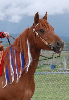 Mane and tail extensions in different colors (even LED light-ups!) for your horse. Perfect for a parade or costume competition. Colorful Manes and Tails - Home