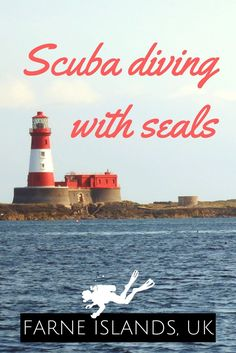 Scuba Diving with the seals of the Farne Islands, United Kingdom - World Adventure Divers - Read more on https://worldadventuredivers.com/2015/10/05/scuba-diving-with-seals-farne-islands-uk/