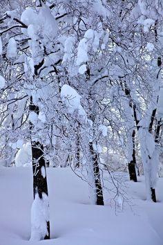 Hokkaido, Japan by Richard Liu Winter Songs, Winter Time, Winter Wonderland Wallpaper, Skiing In Japan, Stations De Ski, I Love Snow, Winter Magic, Snowy Day, Snow Scenes