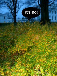 It's Bo!!! #whsocial