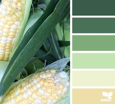 Husked Hues - http://design-seeds.com/index.php/home/entry/husked-hues2