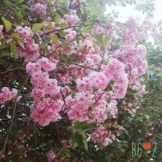 Beautiful World, Plants, Flora, Plant, Planting