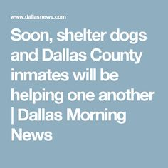 Soon, shelter dogs and Dallas County inmates will be helping one another | Dallas Morning News