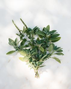 Minutes – Picking herbs from the garden: sage for smudge sticks, lavender to make sachets for closets.