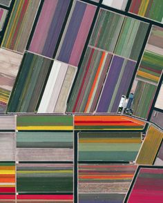 Lines of colorful tulips in Lisse Netherlands to honor the birthday of my favorite artist Piet Mondrian! The Netherlands where Mondrian was born on this day in 1872 produces 4.3 billion tulip bulbs every year. Mondrian is most well known for his paintings with straight black lines and blocks of the three primary colors.  Source imagery: @digitalglobe by dailyoverview