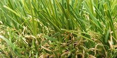 BuildDirect – Artificial Turf - Eco Collection – Two-Tone Green Tan Thatch - Angle View