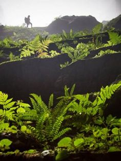Son Doong, inside the cave, plants reaching towards the sunlight. Picture: Ryan Deboodt
