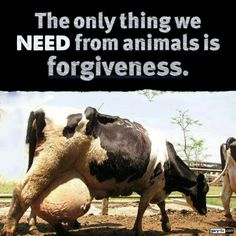 Stop with the dairy!