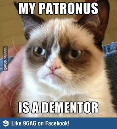 Grumpy Cat AND Harry Potter. When worlds intertwine..