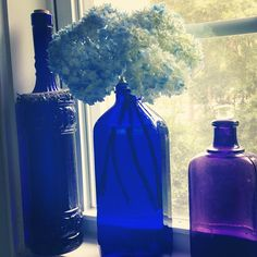 hydrangeas & cobalt blue bottles. #ColorIntensity #CobaltBlue #TurnHeads