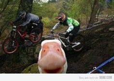 I wanna duck to photo bomb my pics guys...