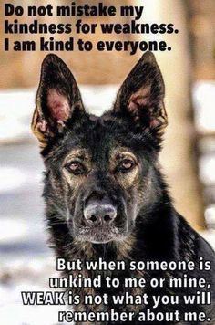 Wicked Training Your German Shepherd Dog Ideas. Mind Blowing Training Your German Shepherd Dog Ideas. Funny Dogs, Funny Animals, Cute Animals, I Love Dogs, Cute Dogs, Game Mode, Be Kind To Everyone, German Shepherd Dogs, German Shepherds