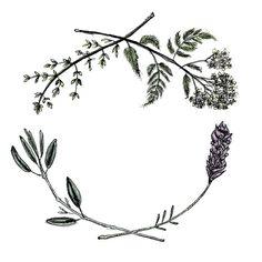 healing wreath laurel - Google Search