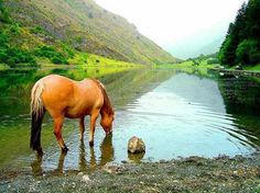 Lead the horse to water, he'll drink. Yep