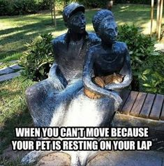 Animal Jokes, Funny Animal Memes, Funny Animal Pictures, Cute Funny Animals, Stupid Funny Memes, Funny Relatable Memes, Cat Memes, Funny Cute, Funny Photos