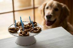 Tente adicionar o bacon esfarelado ou queijo para o sabor adicionado que seu cão é certa amar.