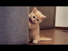 Video Cute Dogs and Cats Compilation 2017  -  MEOMEOTV ✔