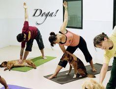 Yoga + Dogs= Doga!