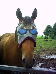 A horse with sunglasses and eyes. Now you could say that he has 4 eyes!!