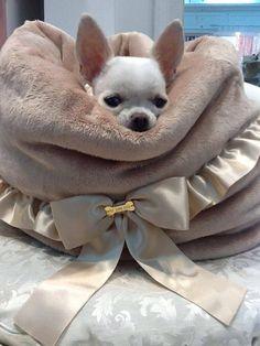 Chihuahua Kisses...